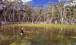 Polaroiding weedy shallows